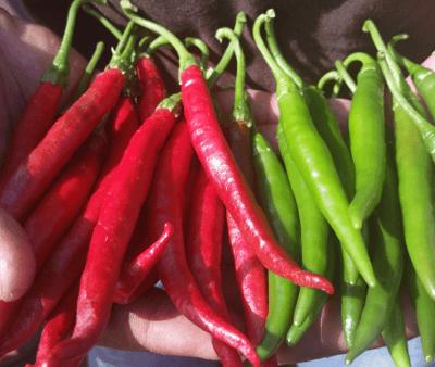 Chile de arbol en espa a jalape os tu gitana for Planta de chile