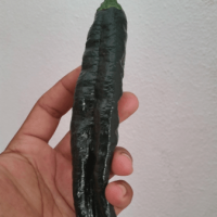 Chilaca